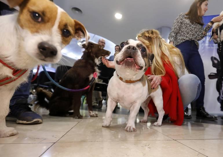Somos la primera empresa de servicios pet friendly de Argentina