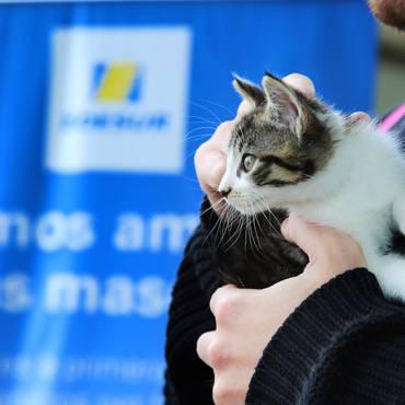 Operativo de atención veterinaria en Villa Lugano